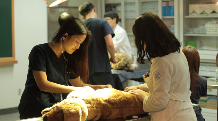 Veterinary students are practicing surgery